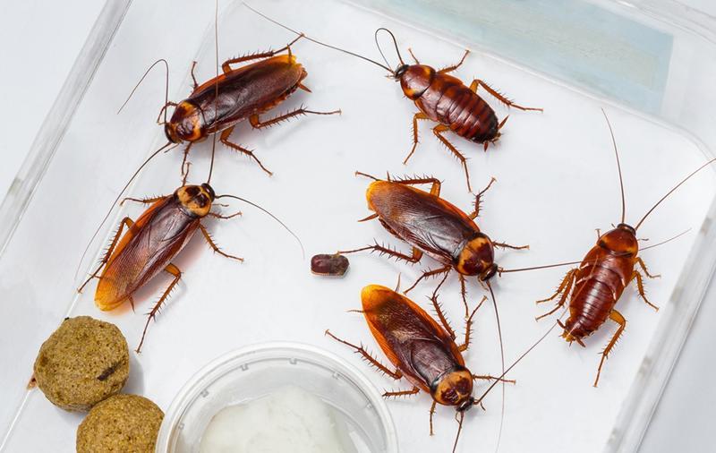 como eliminar cucarachas en casa